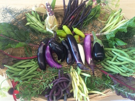 eggplants and other veggies in bowl