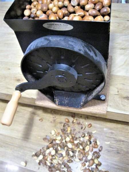 grinding acorns