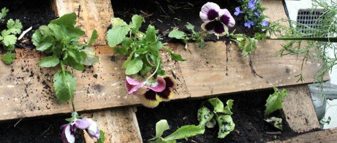 pallet garden with flowers