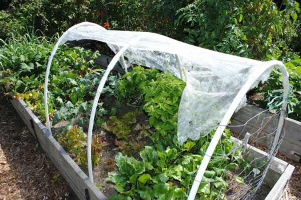 rasied garden bed with hoop house