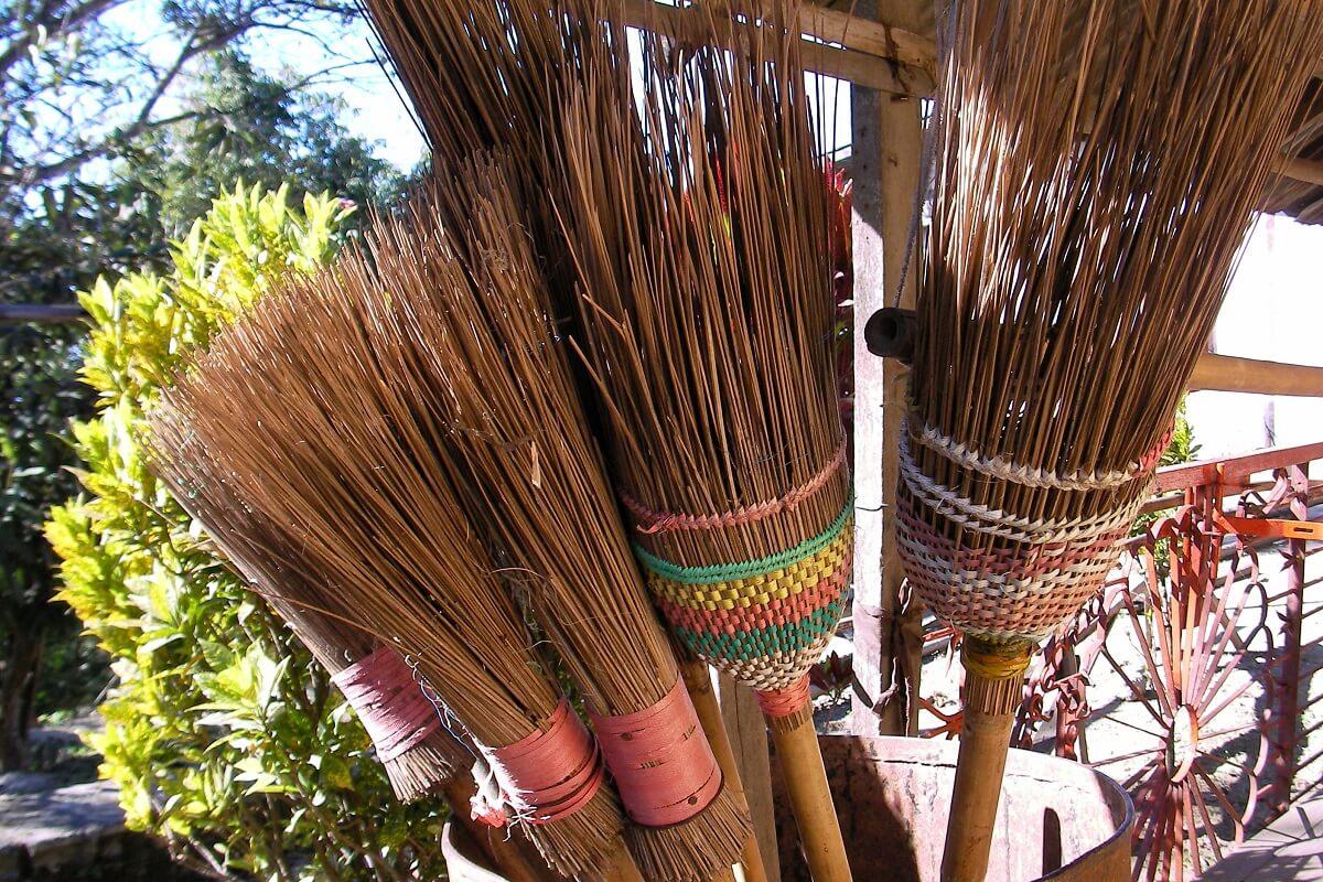 Growing Broom Corn • Insteading