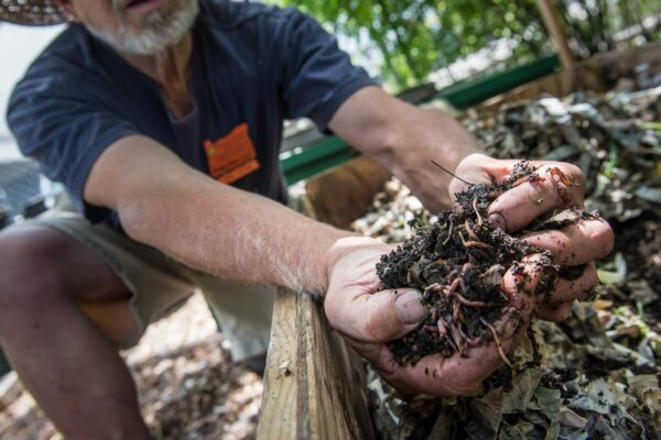 man holding worms from compost
