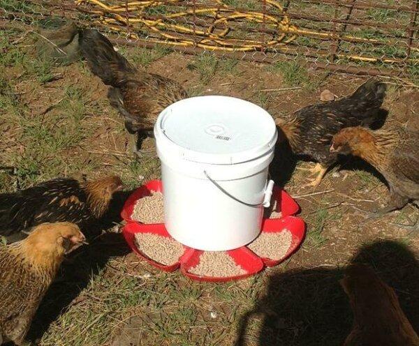 $6 automatic chicken feeder