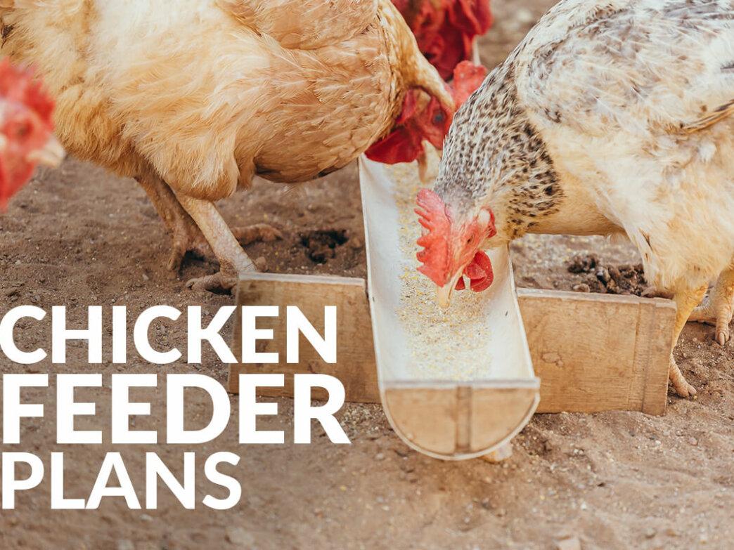 chicken feeder plans featured image