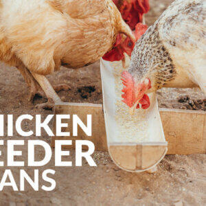 chicken feeder plans featured image