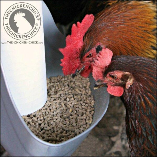 the chicken chick pvc feeder