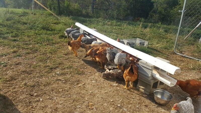 Gutter Trough Chicken Feeder