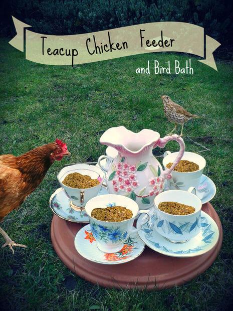 Teacup Chicken Feeder