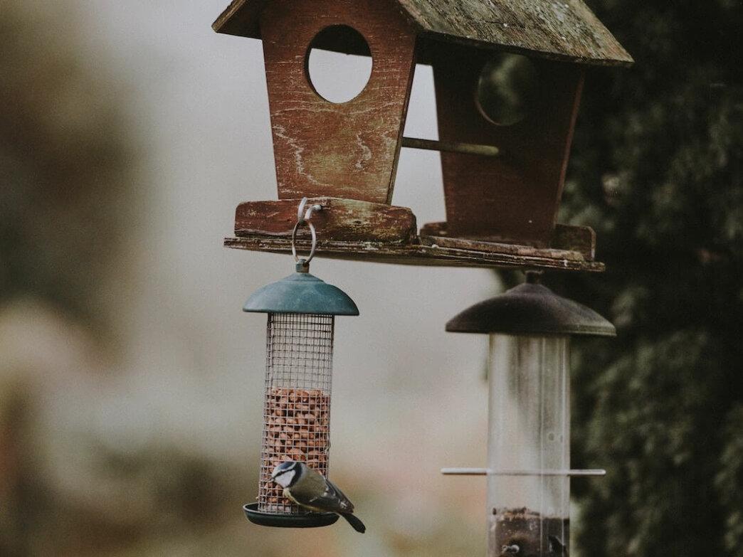 bird and bird house and feeder