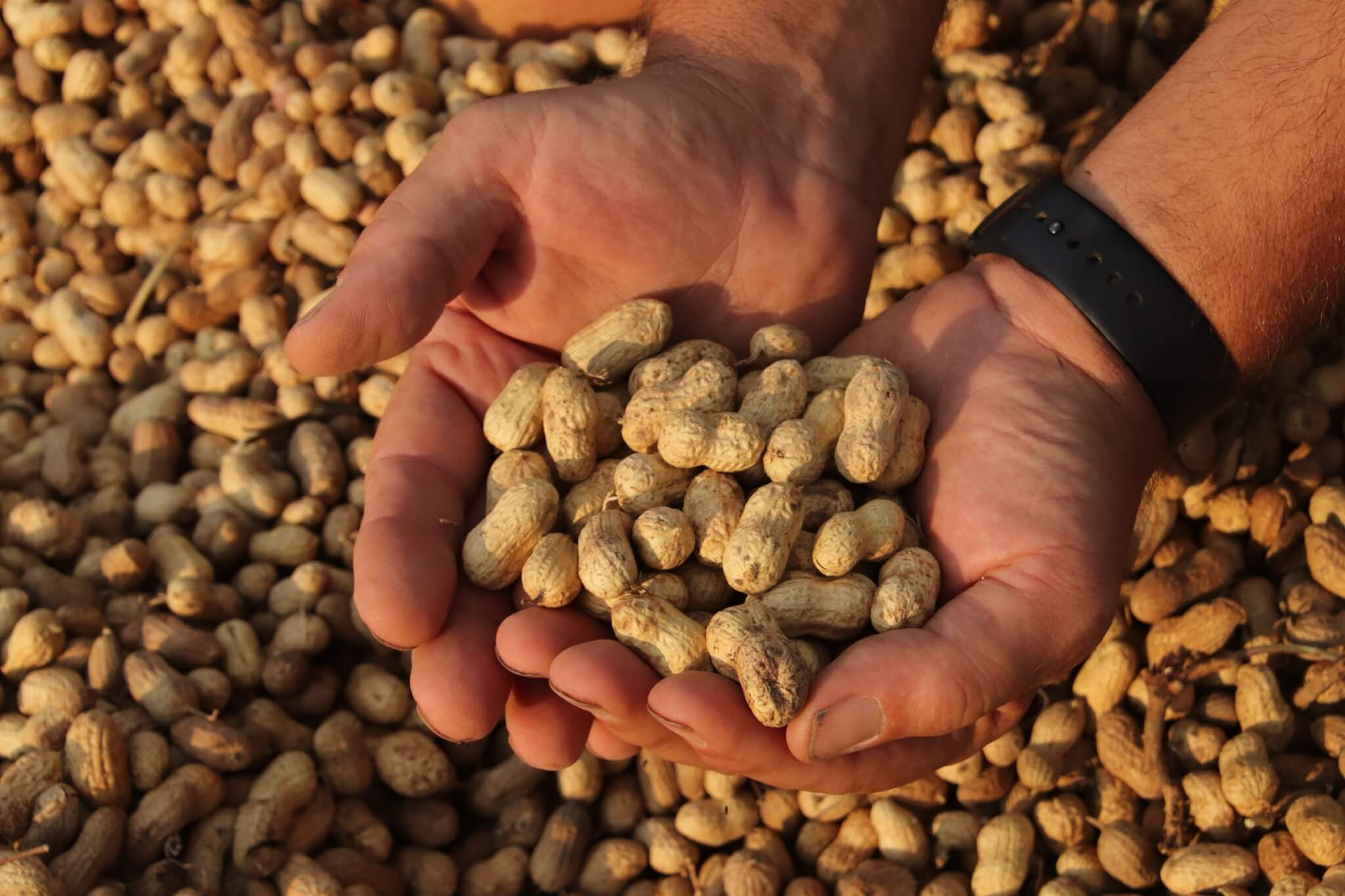holding peanuts