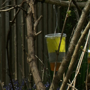 fly traps in trees