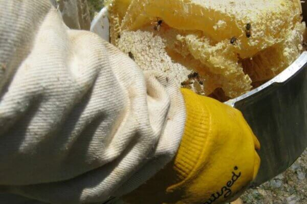 alan harvesting honey