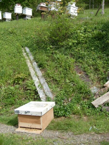 bees swarming to new hive