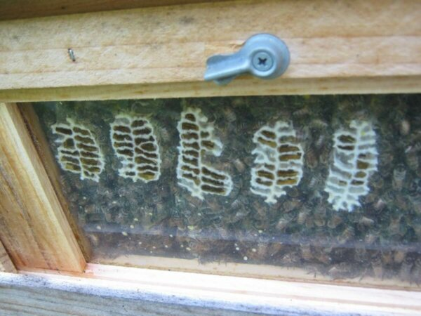 window view in bee hive