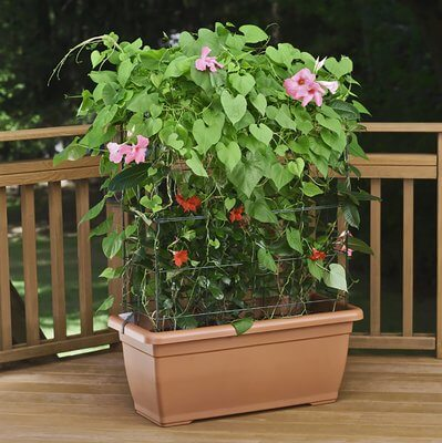 Self-Watering Planter With Trellis