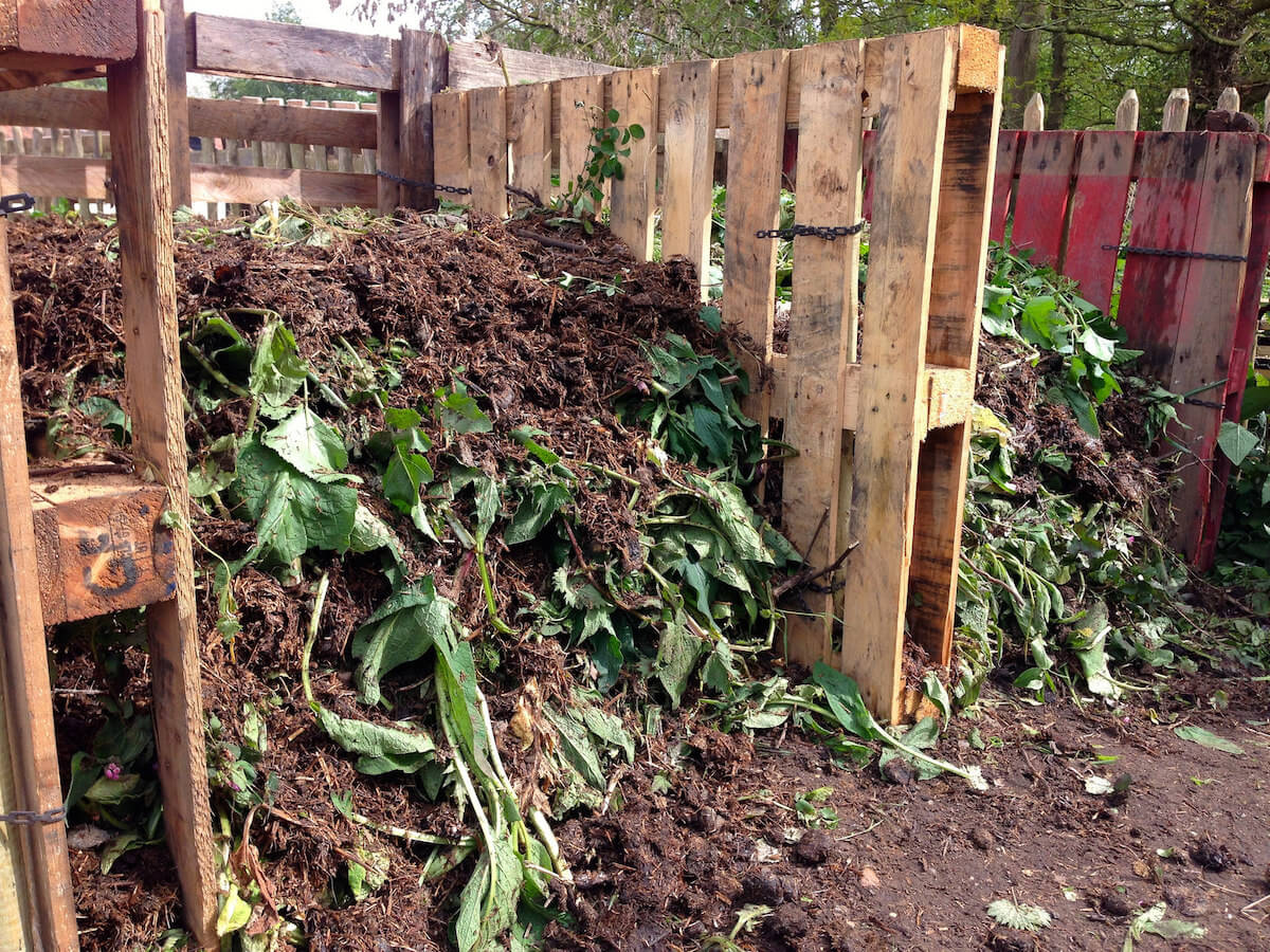 comfrey compost