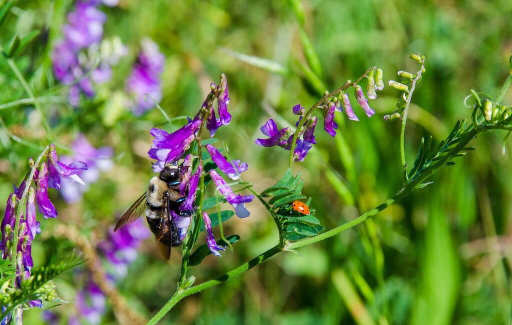 wildflower and bee