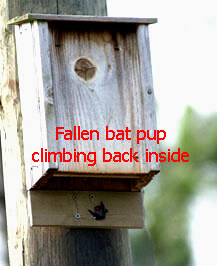 Bat House Pup Catcher Plans