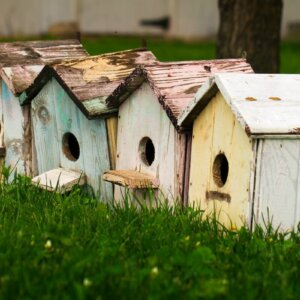 birdhouses in a row