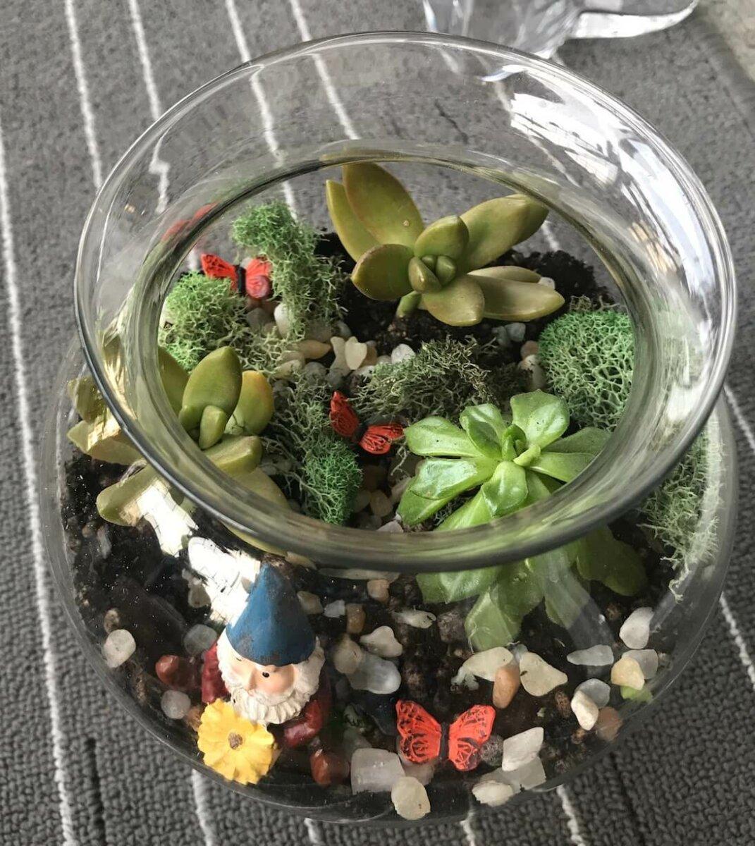 completed terrarium