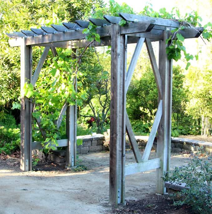 DIY Grape Pergola Arbor Plans