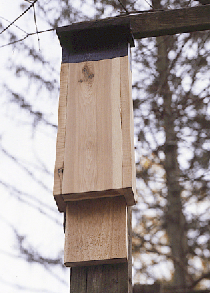 one section bat house plans