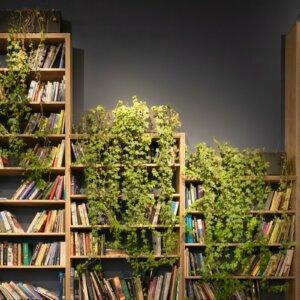 bookshelf with ivy growing on it