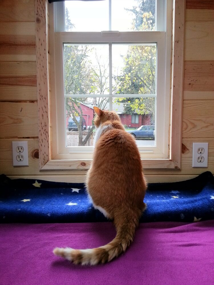 cat in tiny house