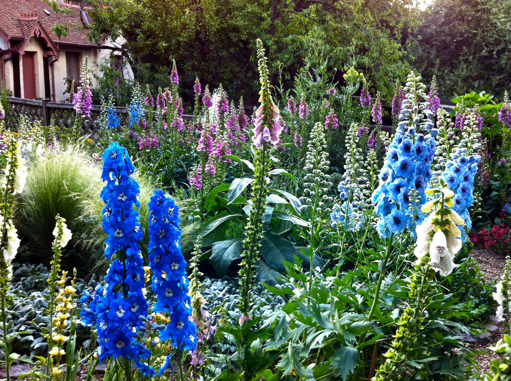 delphiniums and other flowers