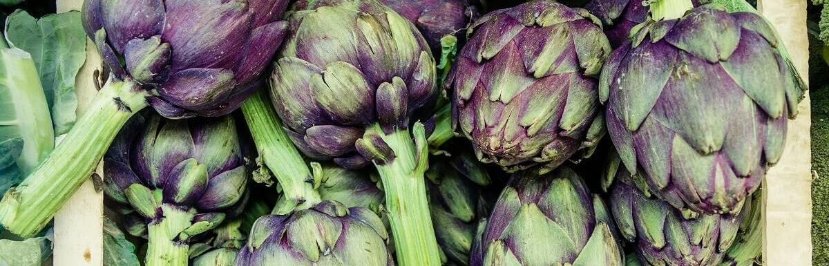 purple colored artichokes