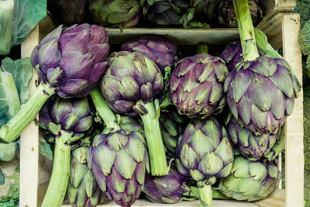 purple colored artichokes