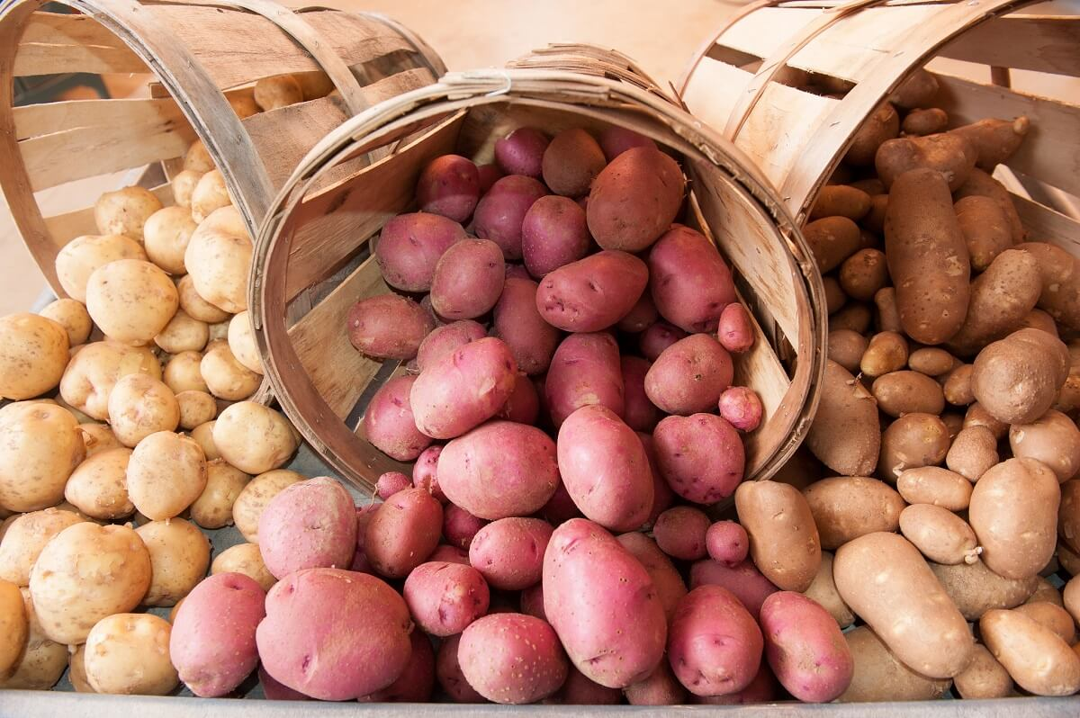 how to store potatoes in bins