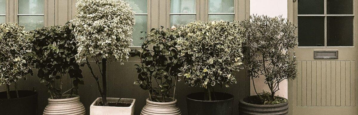 large planters outside