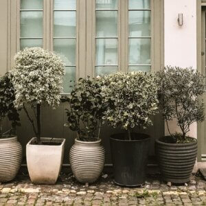 large planters outside