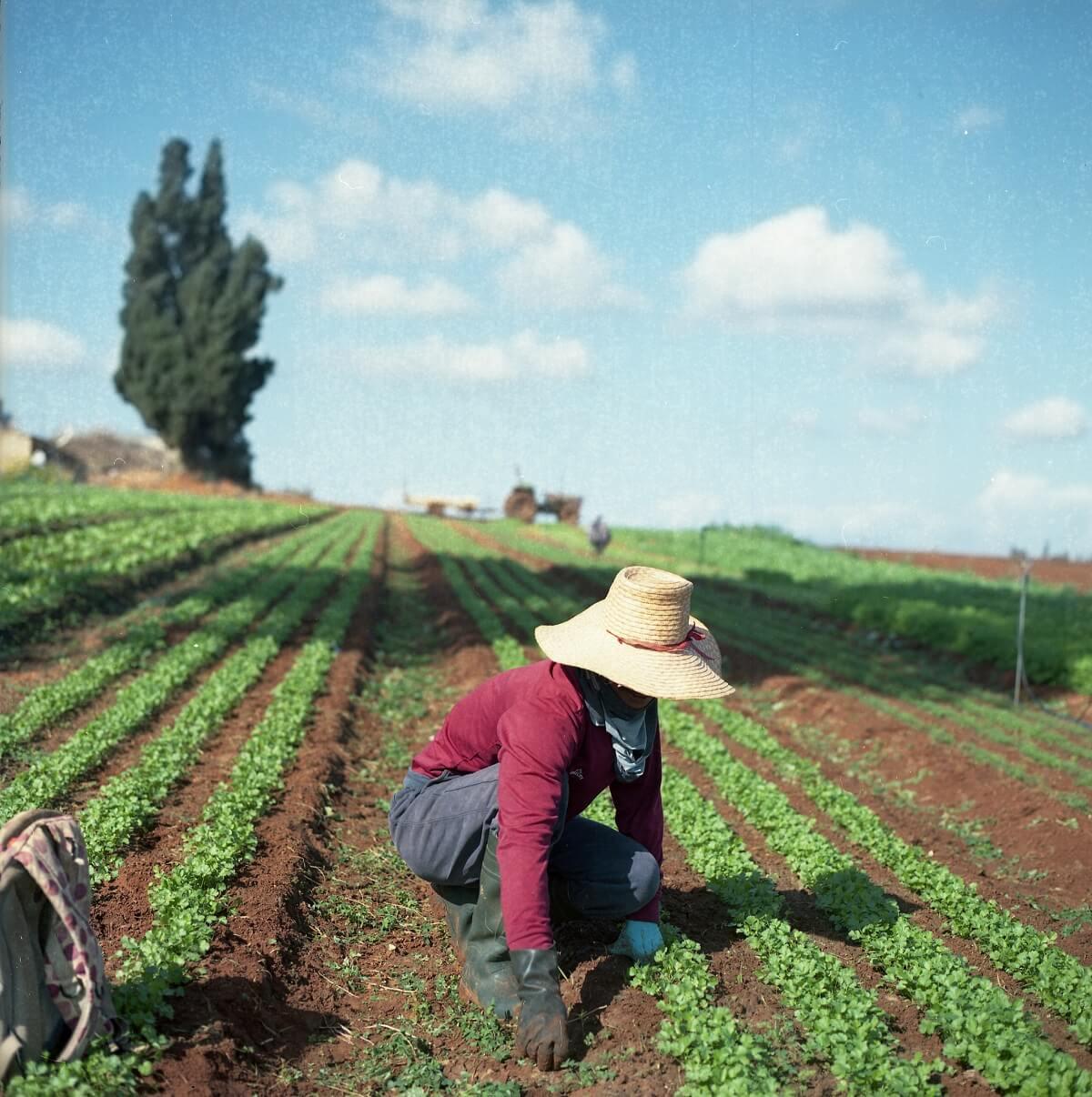 woman amending soil