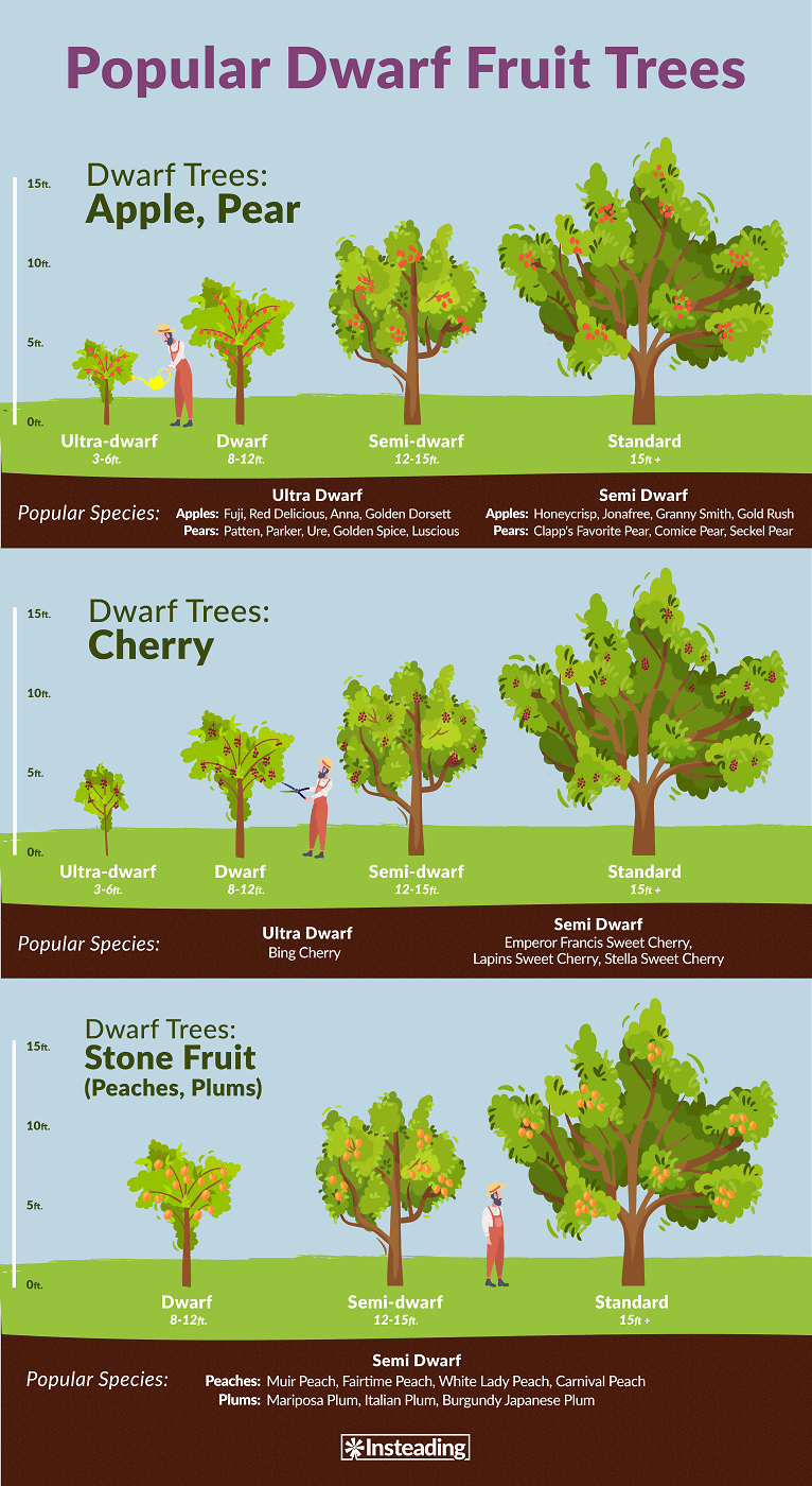 Popular Dwarf Fruit Trees for You to Grow -With small gardens and patios in mind, dwarf trees are deciduous, evergreen trees that are grown to purposely remain in a small, manageable size.When you plant dwarf fruit trees, you can harvest an edible, homegrown, hand-picked crop sooner than you would with the same type of fruit tree in a larger size. #dwarffruittrees #fruittrees #dwarftrees #gardening