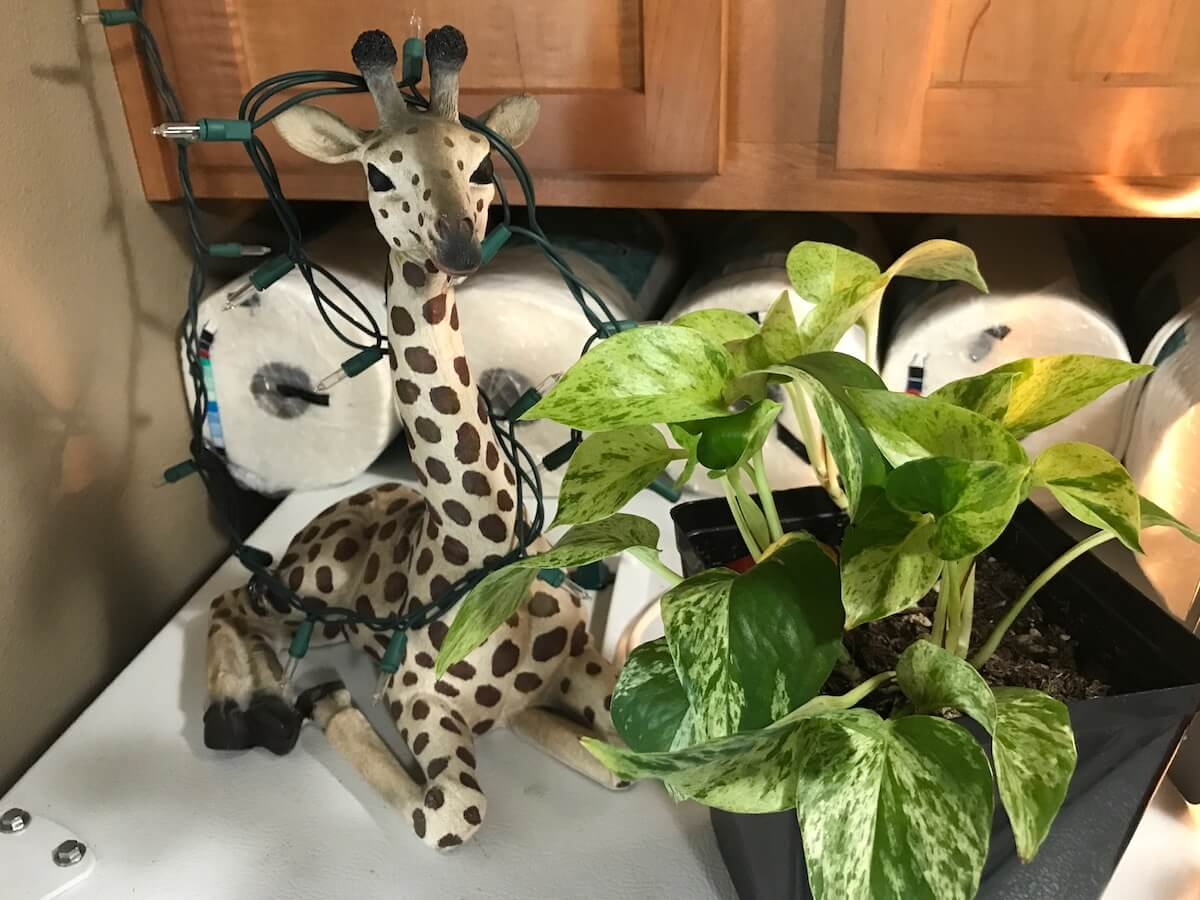 pothos office plants