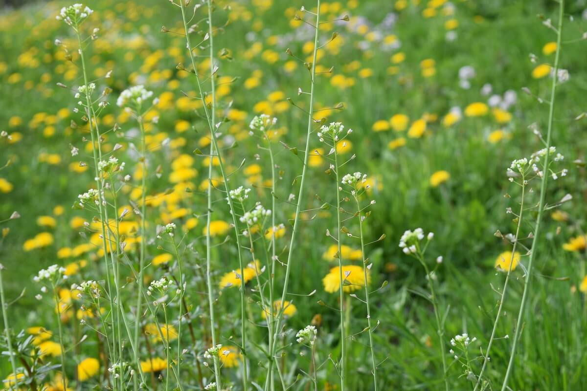 mixed meadow flowers