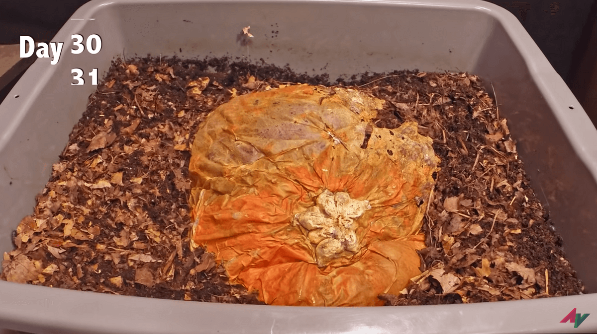 pumpkin after 30 days