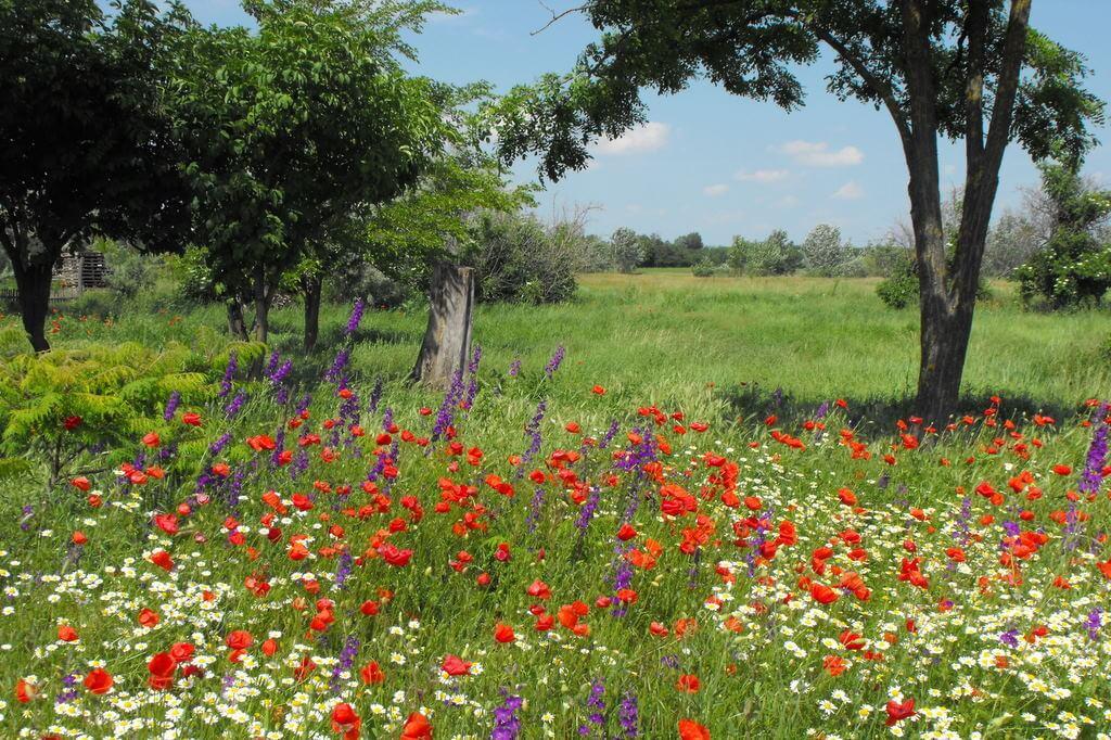 lawn meadow
