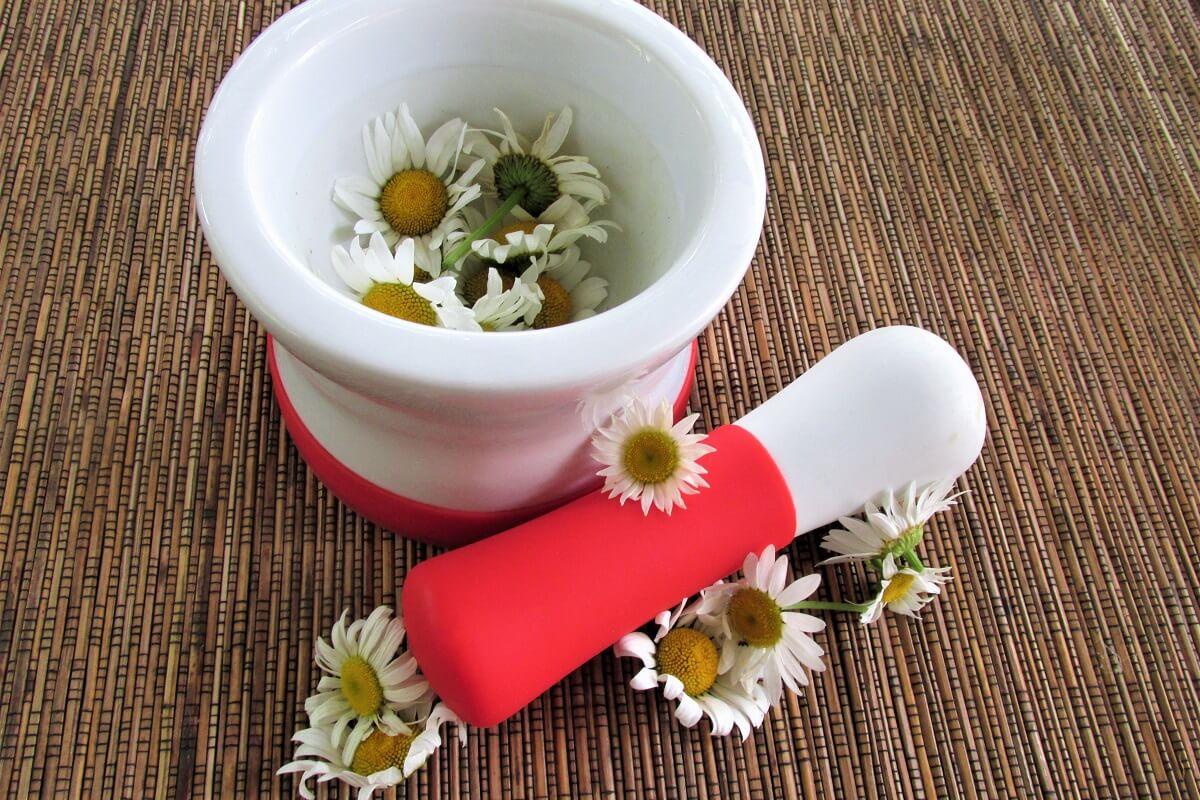 daisies in mortar