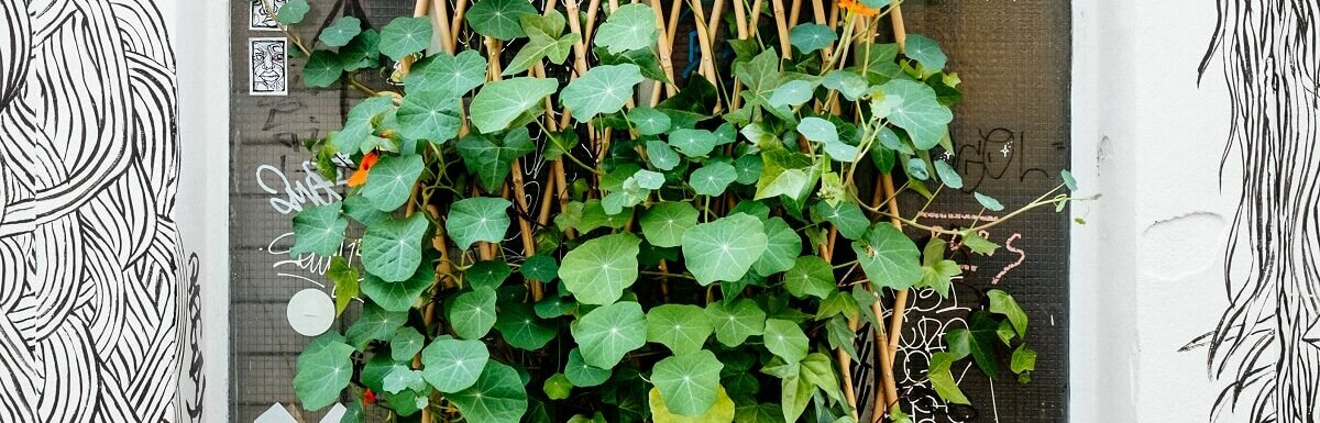 trellis plant on wall