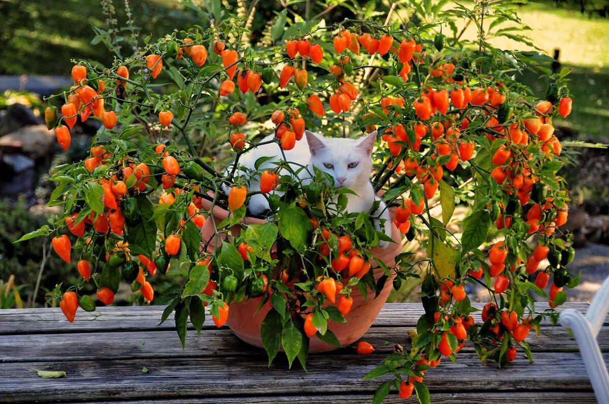 cat in planter