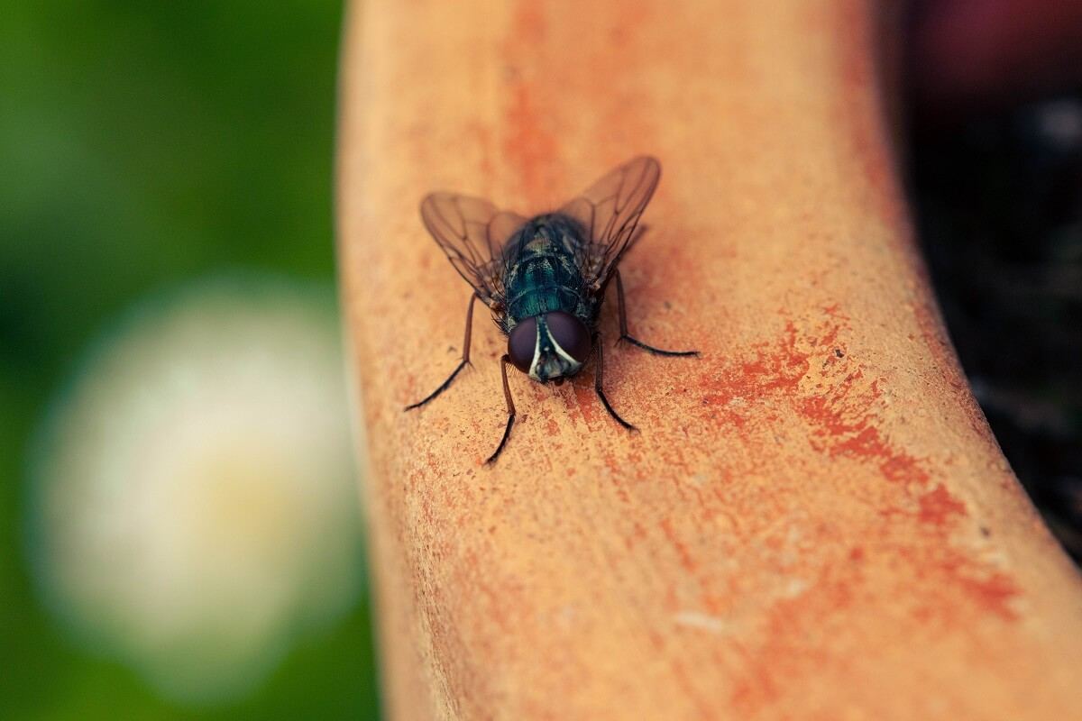 close up photo of fly