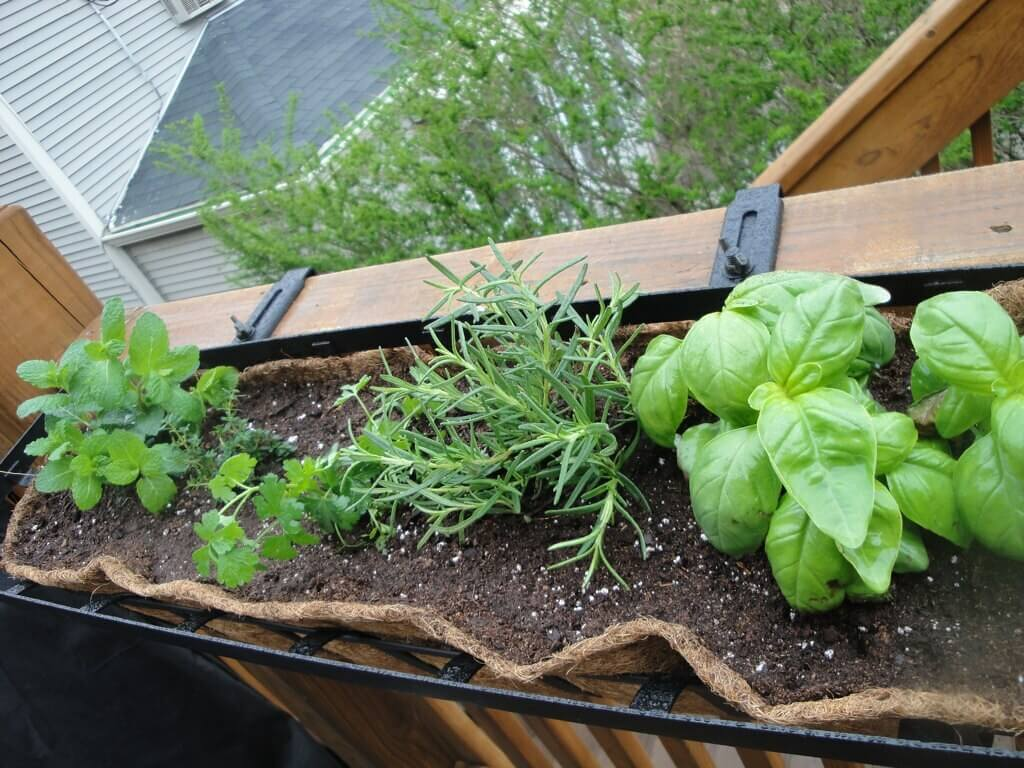 herbs in a planter