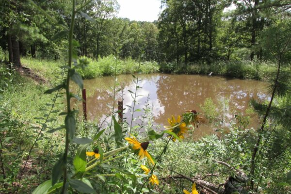 pond at Wren's homestead