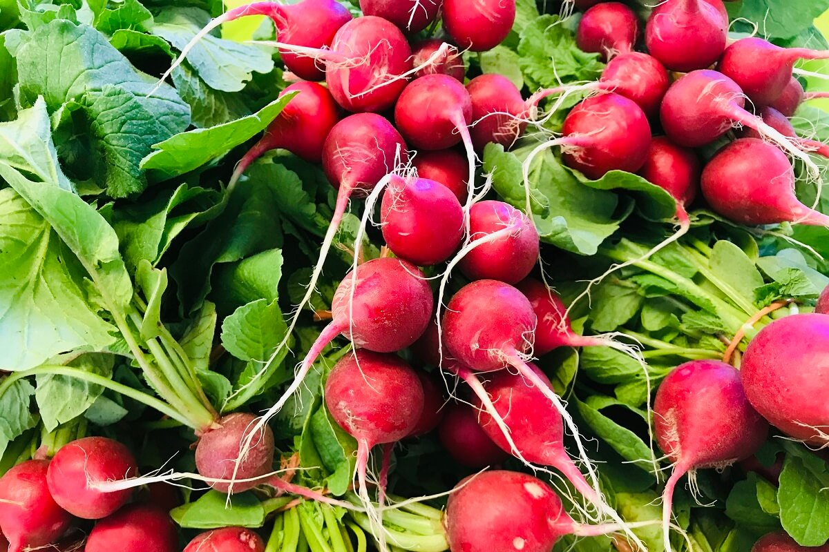 stack of radishes