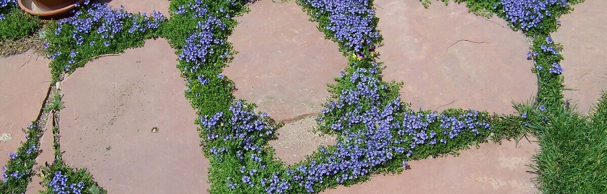 9 Ground Cover Plants To Replace Your, How To Replace Grass With Ground Cover