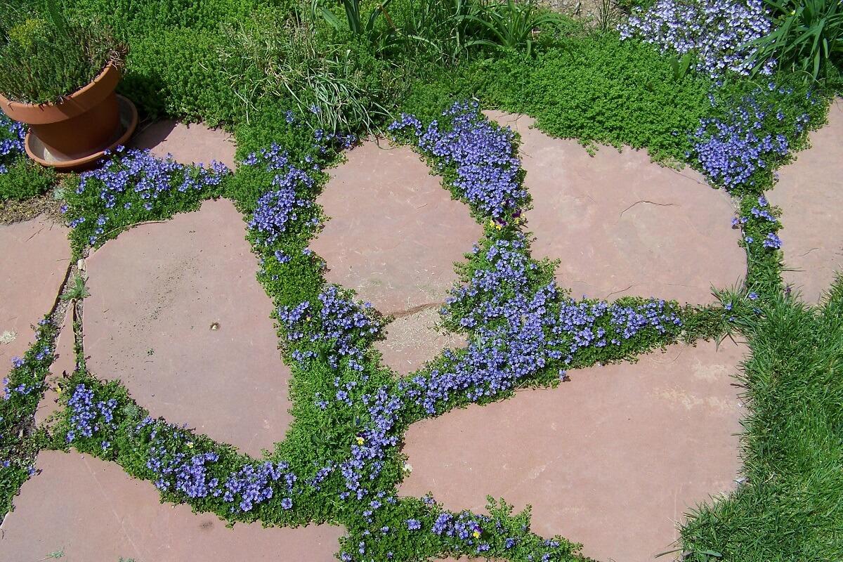 ground cover around flagstone