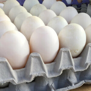 carton of duck eggs